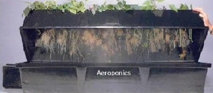 Aeroponic Growing Systems For Greenhouses And Indoors The